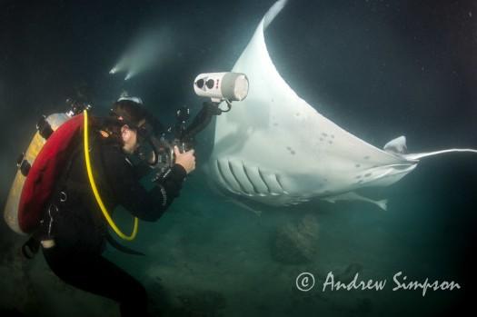 Manta Ray night dive