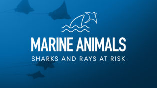 four-pillars-marine-animals