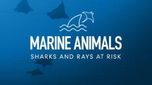 four-pillars-marine-animals