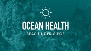 four-pillars-ocean-health