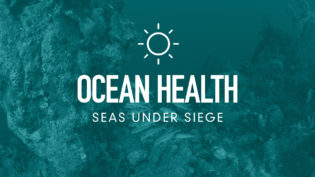 four-pillars-ocean-health